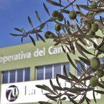 Comprar aceite de oliva Ecológico al mejor precio - Precio aceite de oliva ecológico