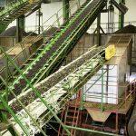 Produciendo aceite de oliva en almazara - Cintas transportadoras con aceitunas